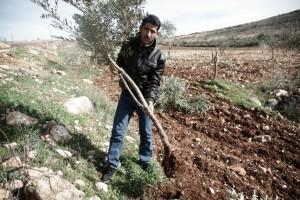 QUSRA : nouvelles attaques de colons dans colonisation abedelathem-odeh-300x200