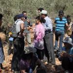 """cueillette avec les Israéliens de l'ONG Ta'Ayusch (""""vivre ensemble"""") venus aider pour la récolte"""